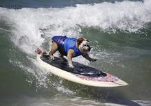 Cão Tillman surfa em Huntington Beach, na Califórnia. 28/9/2014. REUTERS/Lucy Nicholson