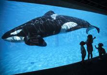 Crianças olhando baleia orca no parque SeaWorld, em San Diego, Califórnia.  20/03/2015    REUTERS/Mike Blake