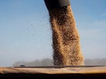 Imagen de archivo. Carga de soja en un camión en Chacabuco, Argentina, 24 abril, 2013. Los impuestos vigentes para la exportación de maíz, trigo y carne serán eliminados un día después de que asuma el nuevo Gobierno, dijo el futuro ministro de Agricultura de Argentina, Ganadería y Pesca, Ricardo Buryaile, en declaraciones al diario Clarín, al tiempo que señaló que el tributo a la exportación de soja se reducirá un 5,0 por ciento. REUTERS/Enrique Marcarian