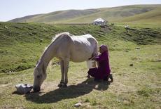 Джамиля Борибаева, жена фермера, доит лошадь на горном плато Ассу в 90 километрах к востоку от Алма-Аты 1 августа 2013 года. Казахстан, терпящий убытки от падения мировых цен на нефть, обратился к национальному напитку - кобыльему молоку - в надежде заместить тающие доходы. REUTERS/Shamil Zhumatov