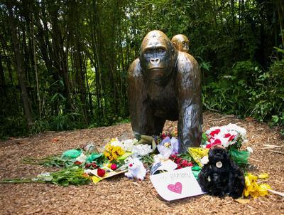 Uproar over gorilla shooting