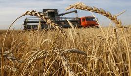 Уборка урожая на поле хозяйства Солгонское к юго-западу от Красноярска 6 сентября 2014 года. Российские экспортные цены на пшеницу продолжили снижение на прошлой неделе перед приближающимся стартом уборки нового урожая и на фоне снижения цен на мировых площадках. REUTERS/Ilya Naymushin