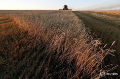 Комбайн собирает урожай на поле пшеницы близ посёлка Тальники 28 августа 2016 года. Правительство РФ решило обнулить на два года экспортную пошлину на пшеницу, сообщил в пятницу в ходе визита в Астрахань премьер-министр РФ Дмитрий Медведев. REUTERS/Ilya Naymushin