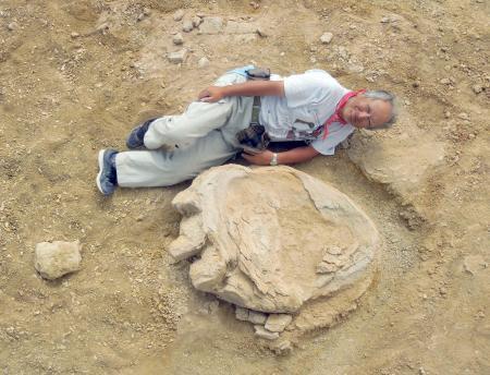 1m超、恐竜足跡の化石発見