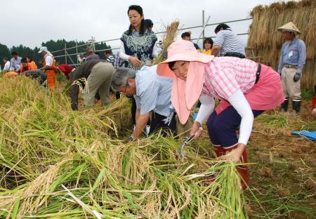 昭恵首相夫人、福島で稲刈り