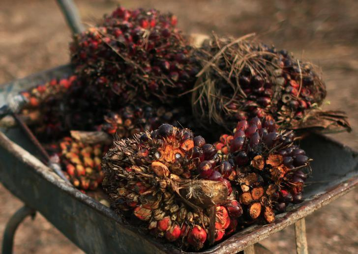 Palm oil fruits are seen placed on a wheelbarrow at a palm oil farm in Klang, outside Kuala Lumpur, February 19, 2014.  REUTERS/Samsul Said/Files