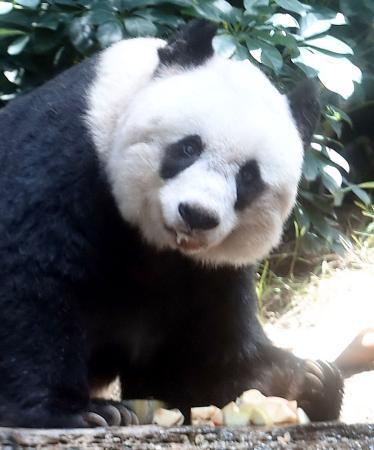 世界最高齢パンダ死ぬ