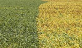 Foto de arquivo mostra plantação de soja na cidade de Primavera do Leste, no Estado de Mato Grosso 07/02/2013 REUTERS/Paulo Whitaker (BRAZIL - Tags: AGRICULTURE BUSINESS COMMODITIES)