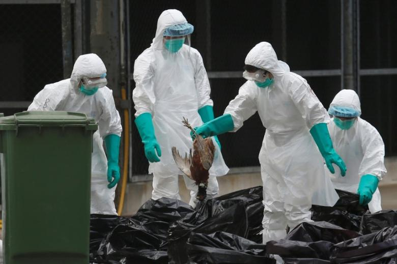 Health officers cull poultry at a wholesale market, as trade in live poultry suspended after a spot check at a local street market revealed the presence of H7N9 bird flu virus, in Hong Kong June 7, 2016.    REUTERS/Bobby Yip