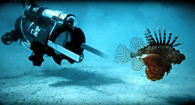 An unmanned undersea robot, designed to go underwater below sport diver depth, the Guardian LF1 by Robots in Service of the Environment (RSE) approaches an invasive lionfish before stunning and collecting it in a marine enclosure in Bermuda on April 18, 2017.   Philippe Rouja/Courtesy RSE/Handout via REUTERS   ATTENTION EDITORS - THIS IMAGE WAS PROVIDED BY A THIRD PARTY. EDITORIAL USE ONLY.
