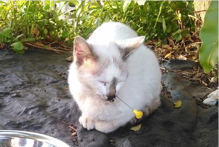 鼻に吹き矢刺さった猫、沖縄