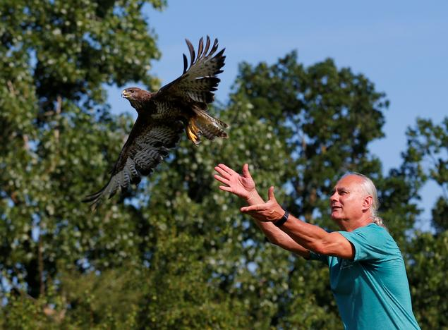 Hungarian veterinarian Janos Deri sets free a buzzard at a hospital for wild birds in Hortobagy National Park, Hungary June 27, 2017. Laszlo Balogh