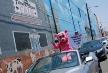 A PETA protester dressed in a pig costume, holds a sign outside the Farmer John meatpacking plant, where according to Los Angeles County health officials 153 workers have tested positive for COVID-19, during the novel coronavirus outbreak in Vernon, California, U.S., May 28, 2020. REUTERS/Mike Blake