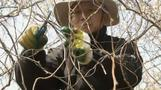 Korean urbanites make the move from city to farm