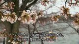 米北東部で季節外れの大雪、ワシントンの桜も花冷え(字幕・14日)