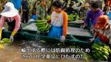 中国発「バナナラッシュ」、ラオスが得たカネと代償(字幕・12日)