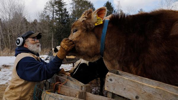 Tainted milk at Maine farm signals broad concern