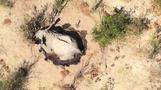 ボツワナのゾウ大量死は感染症が原因か、影響拡大を懸念(字幕・4日)