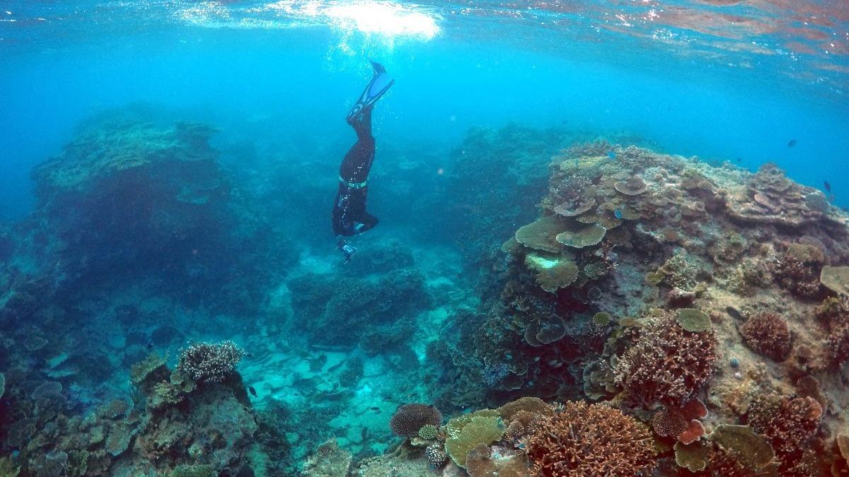 Great Barrier Reef should be listed 'in danger': U.N.