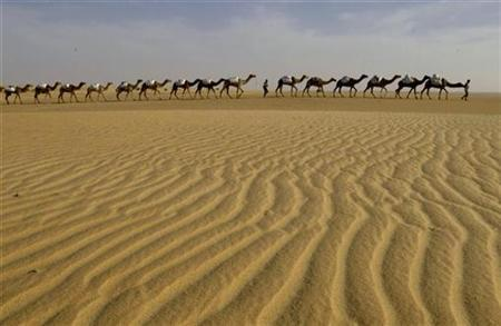 A file photo of a caravan of camels loaded with sacks of raw salt traveling across the desert near Tichit, Mauritania December 5, 2006. Desertification could drive tens of millions of people from their homes, mainly in sub-Saharan Africa and central Asia, a U.N. study warned on Thursday. REUTERS/David Rouge