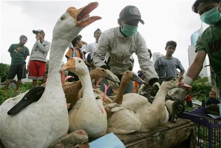 Residents display poultry, which will be culled, after collecting them from a residential area in central Jakarta, Indonesia January 29, 2007. Indonesia will not share bird flu virus samples unless there is a guarantee developing nations will have control over their use and have access to cheap vaccines, a health ministry spokeswoman said on Monday. REUTERS/Dadang Tri