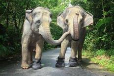 <p>Deux femelles éléphant du zoo de Singapour ont reçu en guise de cadeau de fin d'année de grosses bottes imperméables. /Photo prise le 12 décembre 2007/REUTERS/Zoo de Singapour/Handout</p>