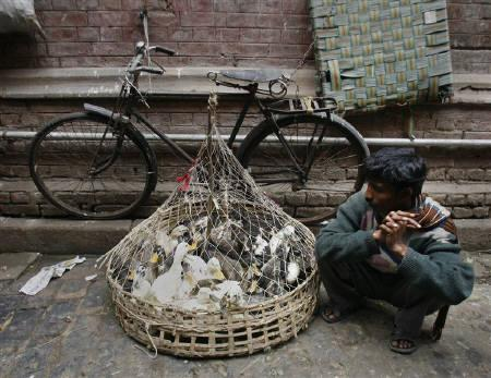 A vendor waits for customers for his basket of ducks at a wholesale market in Kolkata January 24, 2008. Veterinary staff in eastern India are capturing chickens in night-time raids to surprise villagers unwilling to part with their backyard poultry as an outbreak of bird flu spreads. REUTERS/Jayanta Shaw