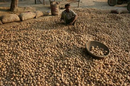 Image result for punjab aloo farmer
