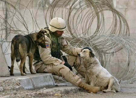 6月6日、イラク駐留米軍兵士らにペットとして拾われた犬が飼い主に再会するためニューアーク国際空港に到着。写真はバグダッドで野良犬の頭をなでる米軍兵士。2004年2月撮影(2008年 ロイター/Kimimasa Mayama)