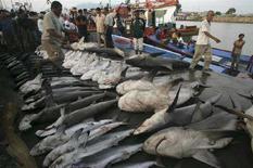 <p>Immagine d'archivio di squali pescati in Indonesia. REUTERS/Tarmizy Harva (INDONESIA)</p>