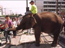 <p>Западный турист гладит слона в Бангкоке 11 января 1996 года. Бангкок в 2008 году признан лучшим городом мира, в то время как Галапагосы снискали славу лучших на свете островов, свидетельствует опрос, произведенный онлайн-версией журнала Travel + Leisure (REUTERS).</p>