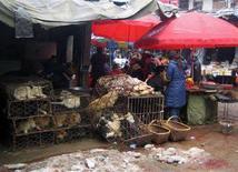 <p>Собаки, выставленные на продажу, в клетках на рынке в Ченьчжоу 3 февраля 2008 года. Власти Китая распорядились убрать из меню всех отелей и ресторанов страны собачье мясо в преддверии летней Олимпиады и сентябрьских Паралимпийских игр. (REUTERS/John Ruwitch)</p>