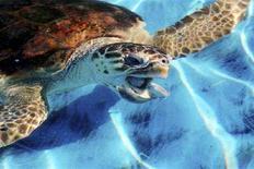 <p>Una tartaruga marina REUTERS/Paulo Siqueira</p>