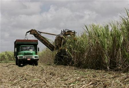 Cuban Sugar Recovery Dealt Big Blow By Ike And Gustav