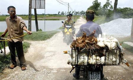 12月28日、ベトナムでニワトリなどの鳥インフル感染が確認されたと国営紙が報じる。写真はハノイ郊外の市場で行われたアヒルなどの消毒作業。昨年6月撮影(2008年 ロイター/Kham)