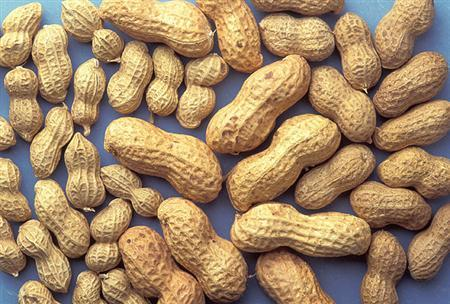 Peanuts are seen in a handout photo from the Department of Agriculture. REUTERS/USDA/Handout