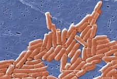 <p>Salmonella bacteria is seen in a colorized scanning electron micrograph. REUTERS/CDC/Handout</p>