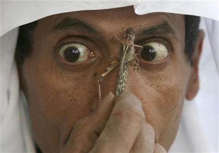 A man holds a locust in down town Riyadh March 11, 2008. REUTERS/Fahad Shadeed