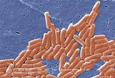 <p>Salmonella bacteria in an undated image courtesy of the CDC. REUTERS/CDC/Handout</p>