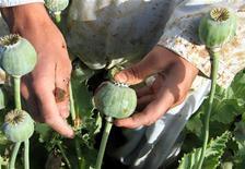 <p>Афганский крестьянин собирает урожай на поле опиумного мака в провинции Гильменд на юге страны 3 мая 2008 года. Иран предложил помощь в борьбе с контрабандой наркотиков из Афганистана в ответ на призыв к региональному сотрудничеству в этой сфере. REUTERS/Abdul Qodus</p>