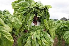 <p>A farm worker carries tobacco on a farm on the outskirts of the Zimbabwean capital Harare, February 21, 2006. REUTERS/Howard Burditt</p>