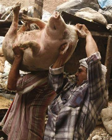 Egyptian workers struggle to move a household pig into a truck to send it to the main slaughterhouse in the Manshiyat Nasser area in Cairo, May 4, 2009. REUTERS/Asmaa Waguih