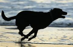 <p>A dog runs along the beach after sunset in Cardiff, California December 5, 2007. REUTERS/Mike Blake</p>
