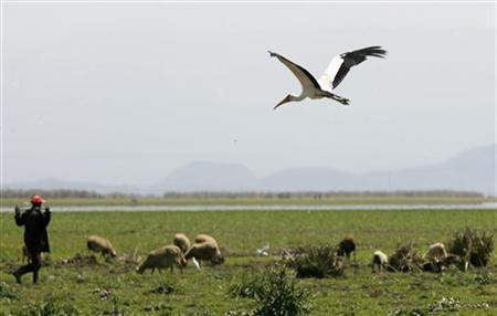 A bird flies over Lake Naivasha, the only fresh water ecosystem in the eastern Rift Valley, June 4, 2009. REUTERS/Thomas Mukoya