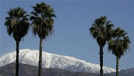 <p>Snow is shown on the San Bernardino mountians framed by four palm trees in Covina, California December 26, 2008. REUTERS/Fred Prouser</p>