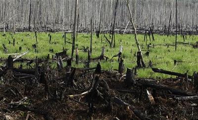 Climate spotlight: Deforestation