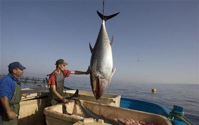 EU confirms support for bluefin tuna trade ban