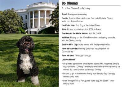 "America's first dog ""Bo"""