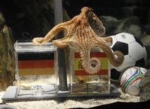 """<p>O polvo Paul, o """"polvo vidente"""" prevê vitória da Espanha contra a Alemanha na semifinal da Copa do Mundo. 06/07/2010 REUTERS/Wolfgang Rattay</p>"""