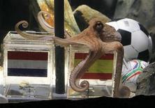 """<p>O polvo Paul, conhecido como o """"polvo oráculo"""", prevê vitóra da Espanha sobre a Holanda na final da Copa do Mundo. 09/07/2010 REUTERS/Wolfgang Rattay</p>"""